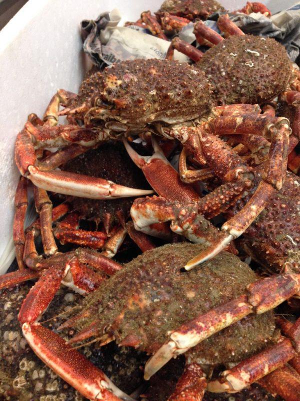 Spider Crab - Buy Online